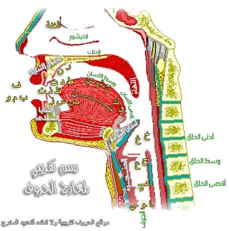 open-quran